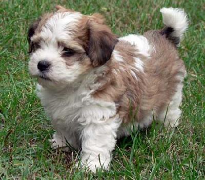 hrana royal canin junior